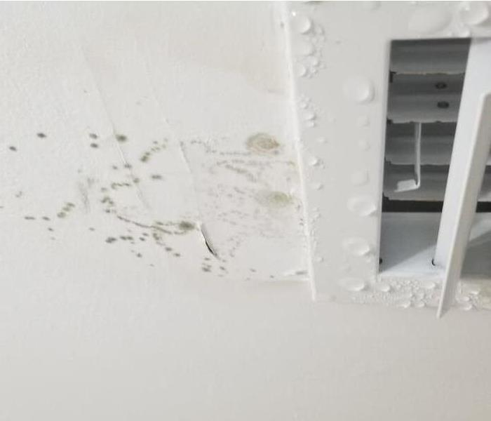 Mold Damage – Boca Raton Commercial Building