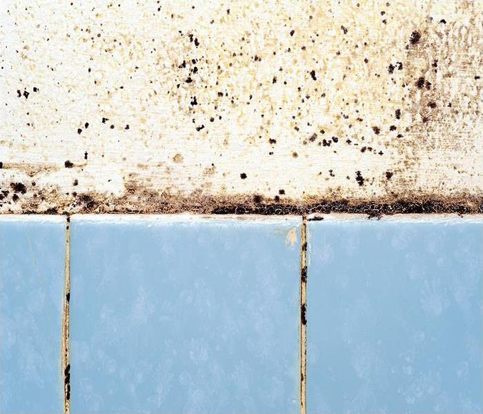 Mold Remediation How Our Mold Damage Experts Can Restore Your Davie Property