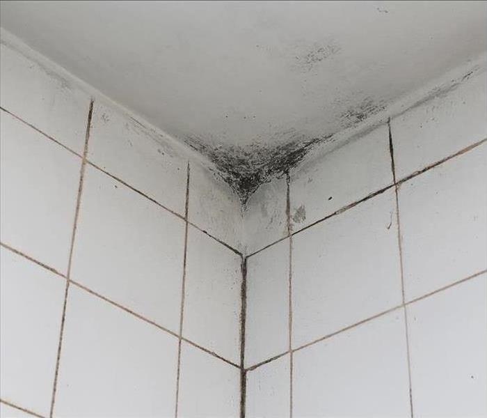 Mold Remediation Servpro Is The Firm To Call For Removal In Ft Lauderdale