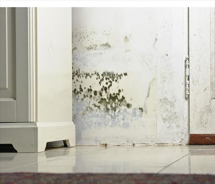 Mold Remediation Important Facts about the Process of Mold Removal In Fort Lauderdale
