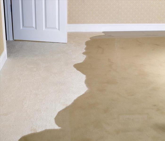 Water Damage Plantation's Water Damage Technicians Explain Moisture's Effects on Carpet