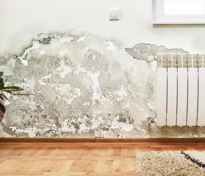 Mold Remediation The Truth About Mold Growth in Your Plantation Home