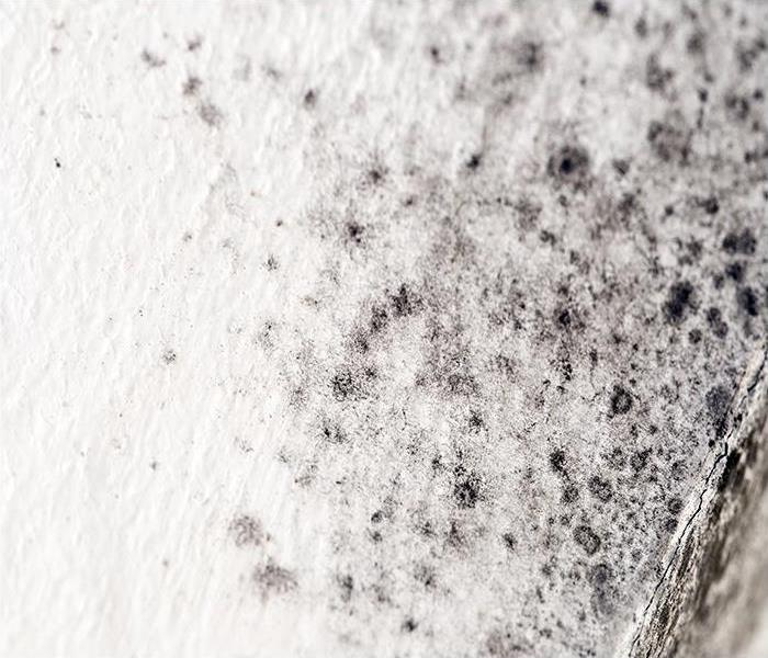 Mold Remediation Is Mold Removal In Your Fort Lauderdale Home Even Possible?